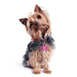 Kolekcja imienników dla psów - KOKARDKI