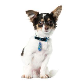 Kolekcja zawieszek dla psów- KRAWATY