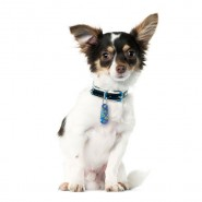 Zawieszka z krawatem na psie