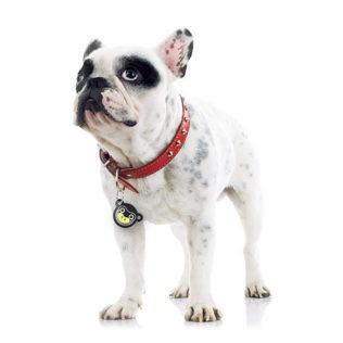 Kolekcja identyfikatorów dla psów - ZWIERZAKI